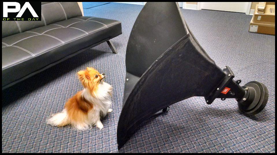 JBL horn with dog